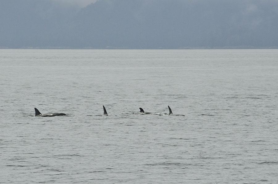 20150720 8965 orcas 5 r