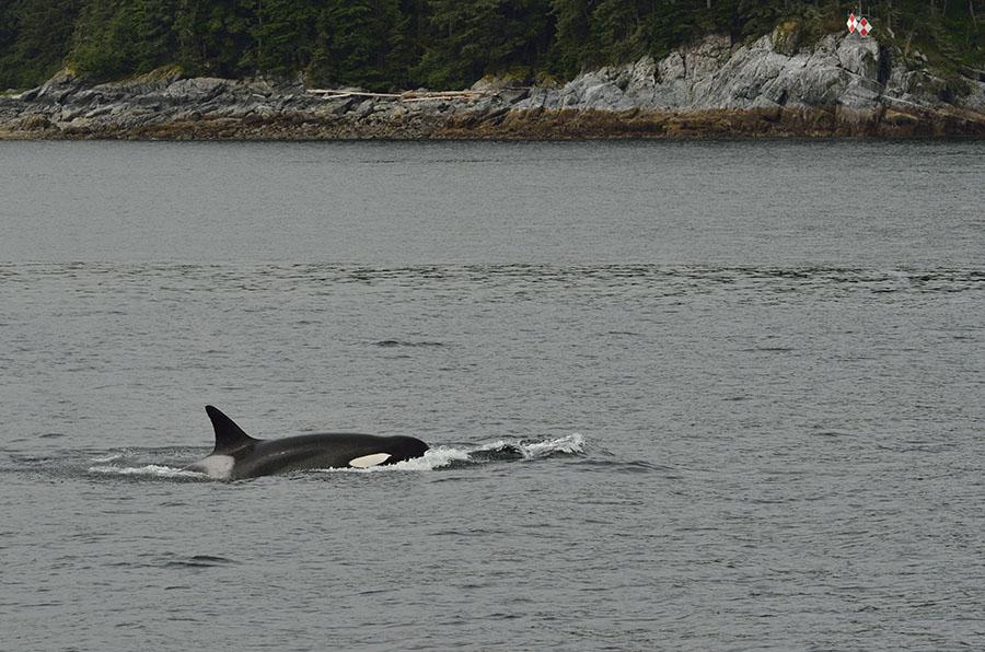 20150720 9000 orcas 12 r