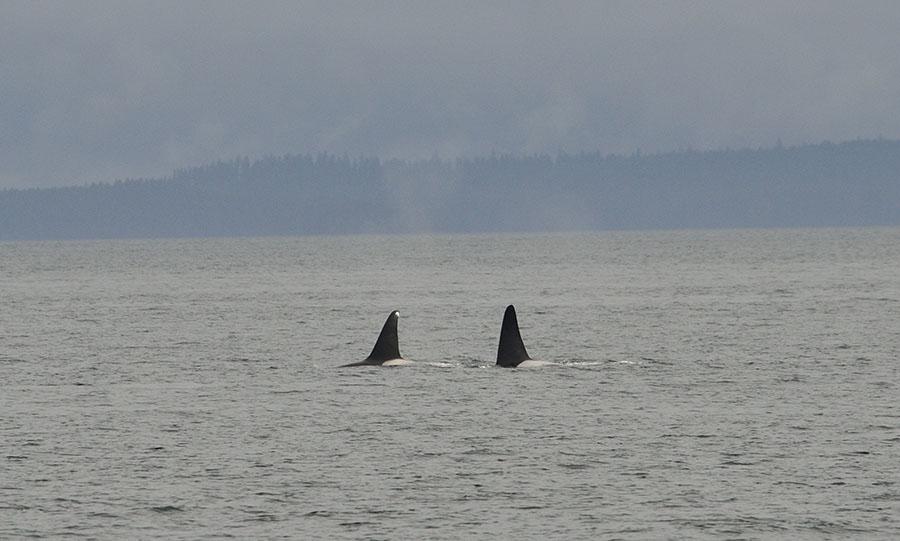 20150720 9039 orcas 9 r