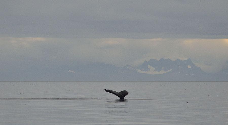20150725 9411 whale tail landscape r
