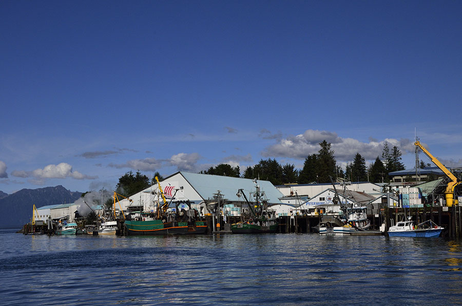 Salmon time journeys on a trawler for Petersburg alaska fishing