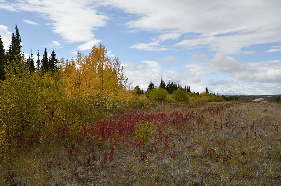 20150901 0406 fall color on alcan 2 r
