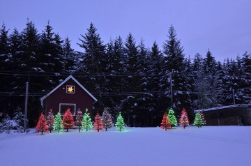 20151228 2354 n nordic lighted trees r