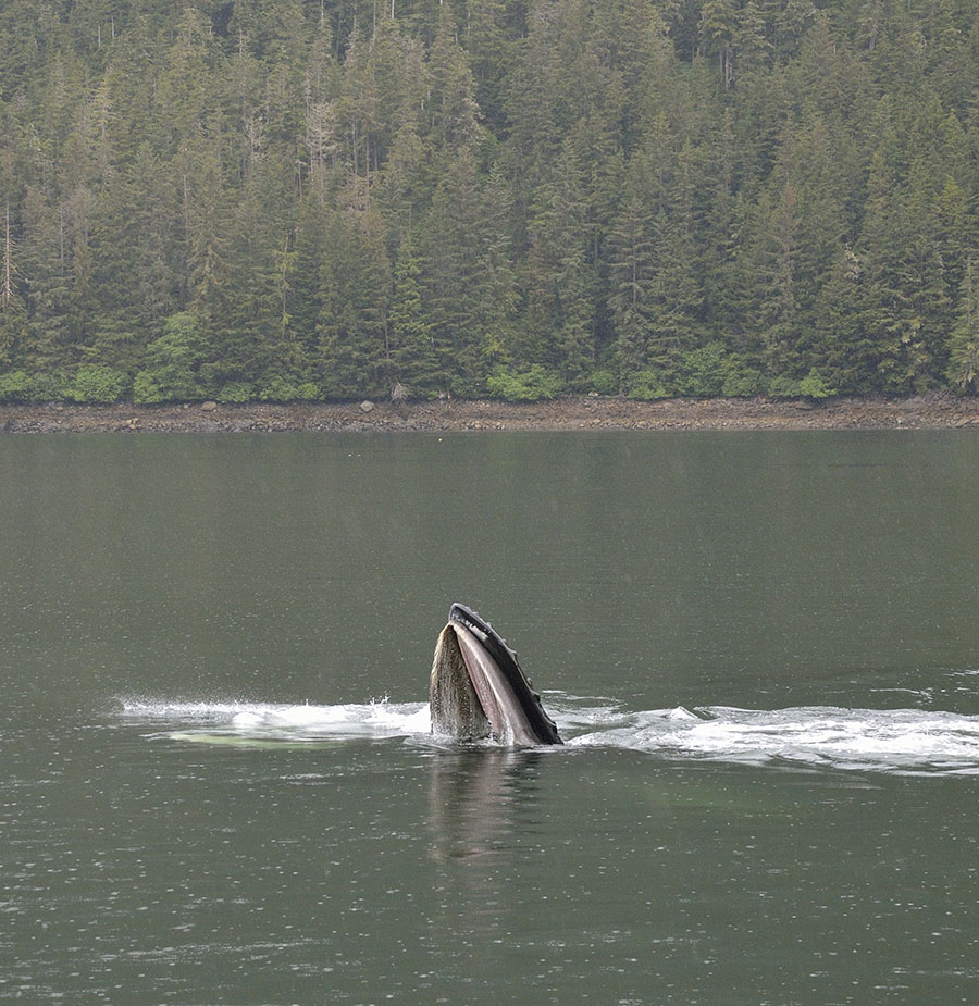 20160605 1515 taku whale mouth 5 r