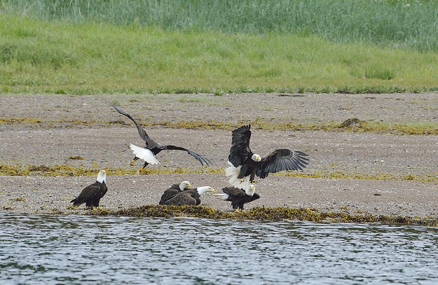 20160617 2127 pavlov eagle confab 4 r