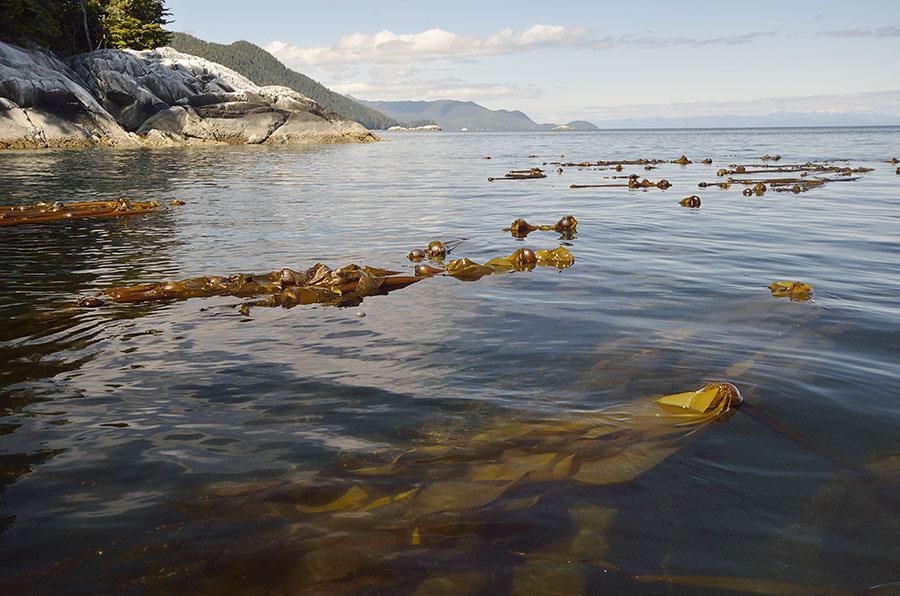 20160618 2385 ell kelp wide r