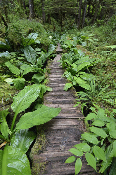20160706 2892 cascade creek boardwalk trail r