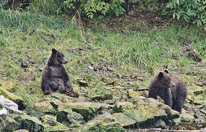 20160816 0935 pavlov 2yr cubs sitting funny r