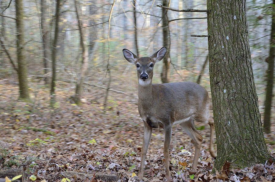 20161109-3363-gsmnp-deer-r