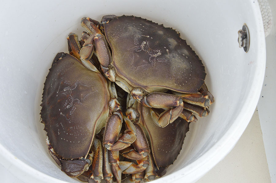 Crabs, Critters, and Spring | Journeys on a Trawler