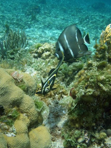 2010 05 24 teen angelfish RESIZE