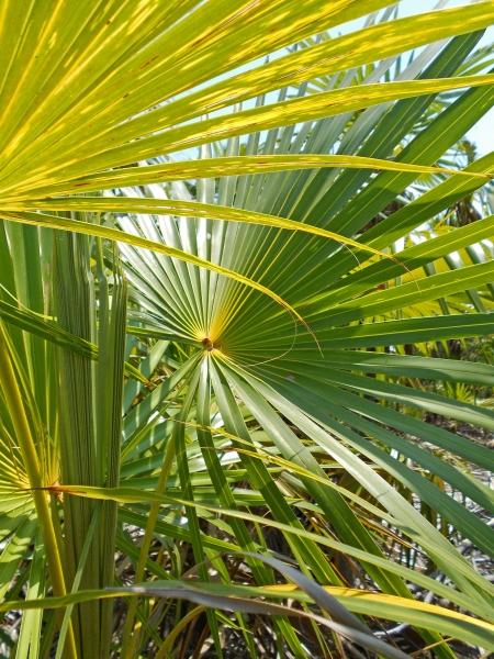 2012-05-10 palms RESIZE