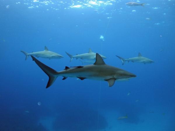 2012-05-18 shark plus 3 RESIZE