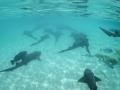 2010 04 29 highborne nurse sharks RESIZE