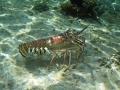 2010 05 09 lobster 2 RESIZE