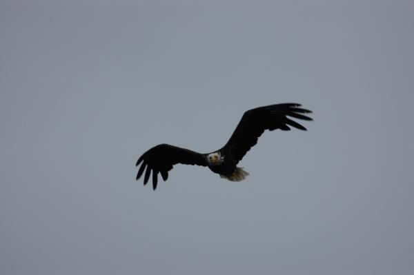 eagle2.jpg RESIZE