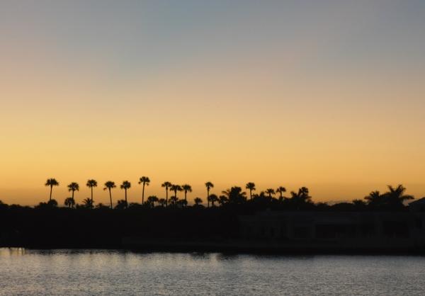 2011 11 30 lake worth palm tree silhouette - Copy RESIZE