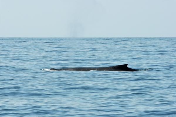 2011 07 16 humpback RESIZE